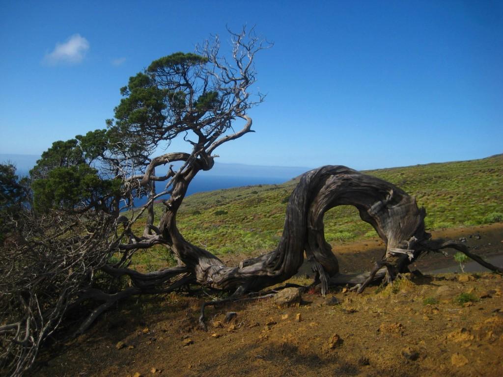 Aloha Krokus - vaarweek